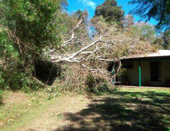 goldcoast-tree-maintenance
