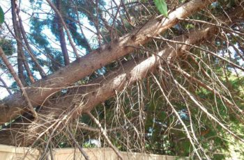 tree-maintenance-services